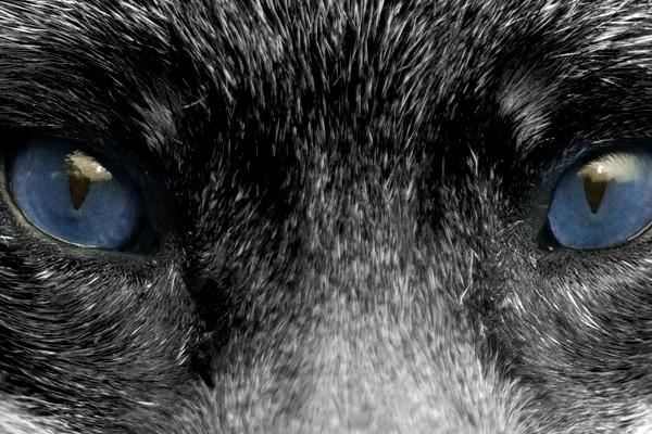 fox_eye